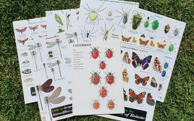 Identifying Insects