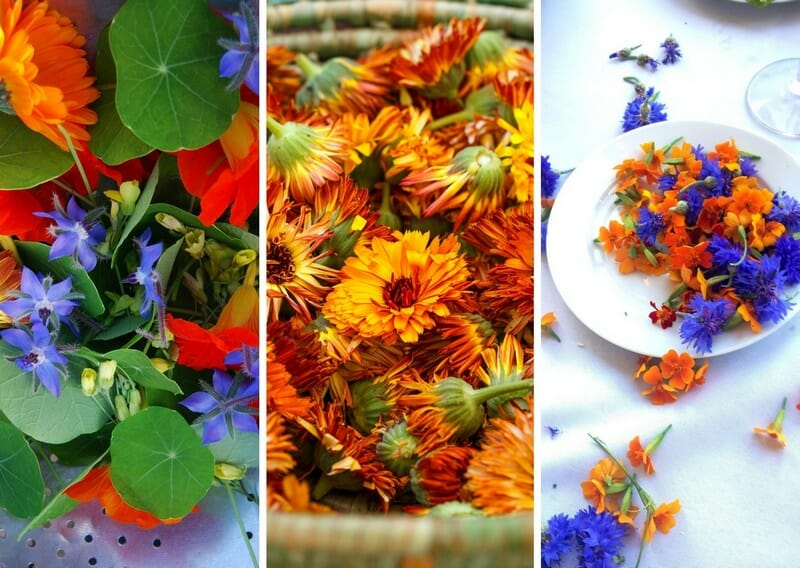 3 sets of edible flowers