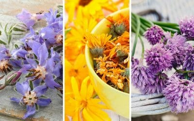 My Top 10 Edible Flowers