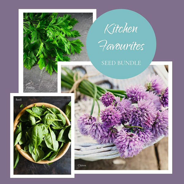 Kitchen favourites seed bundle